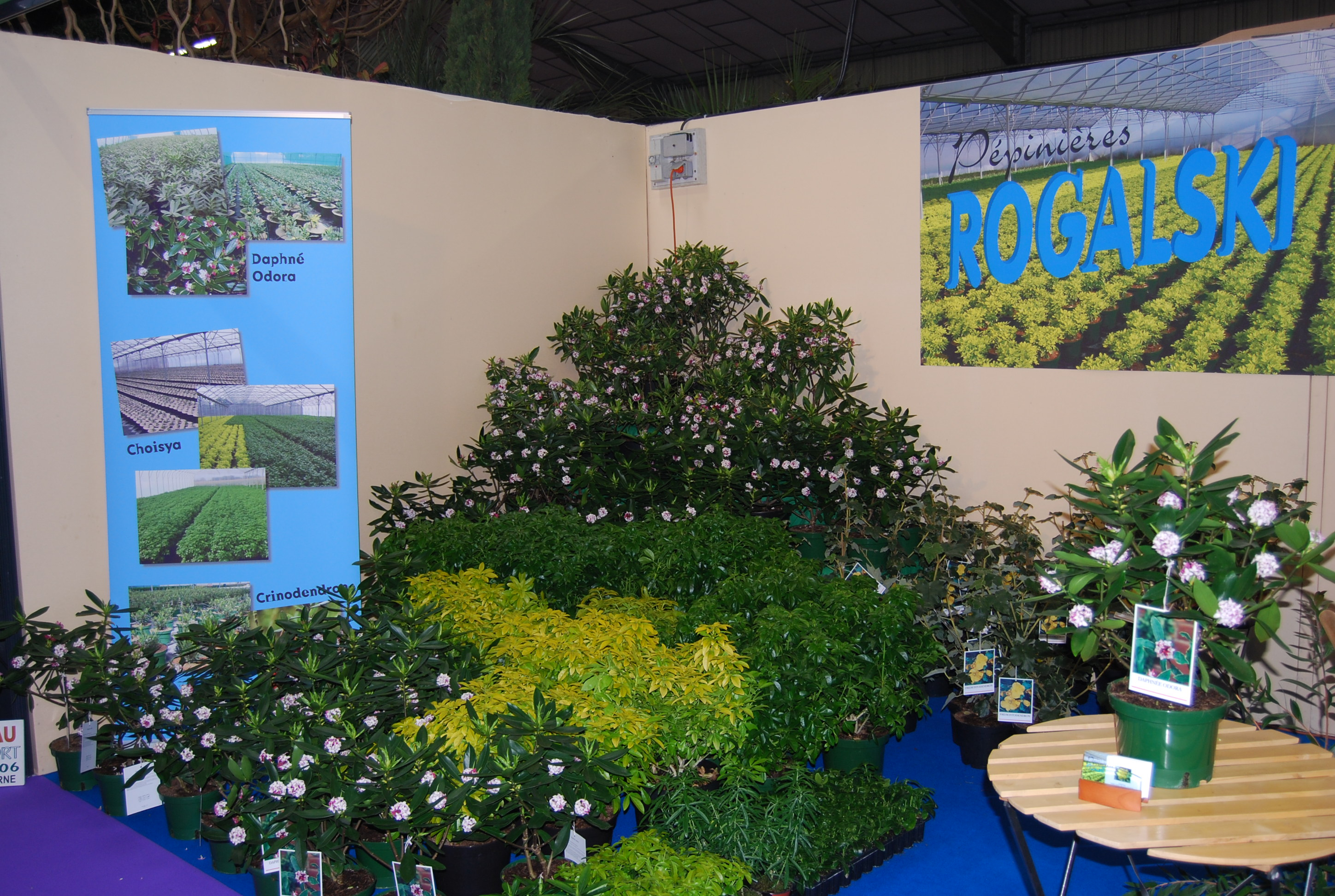 P pini res rogalski actualit s et liens salon du for Salon vegetal lyon